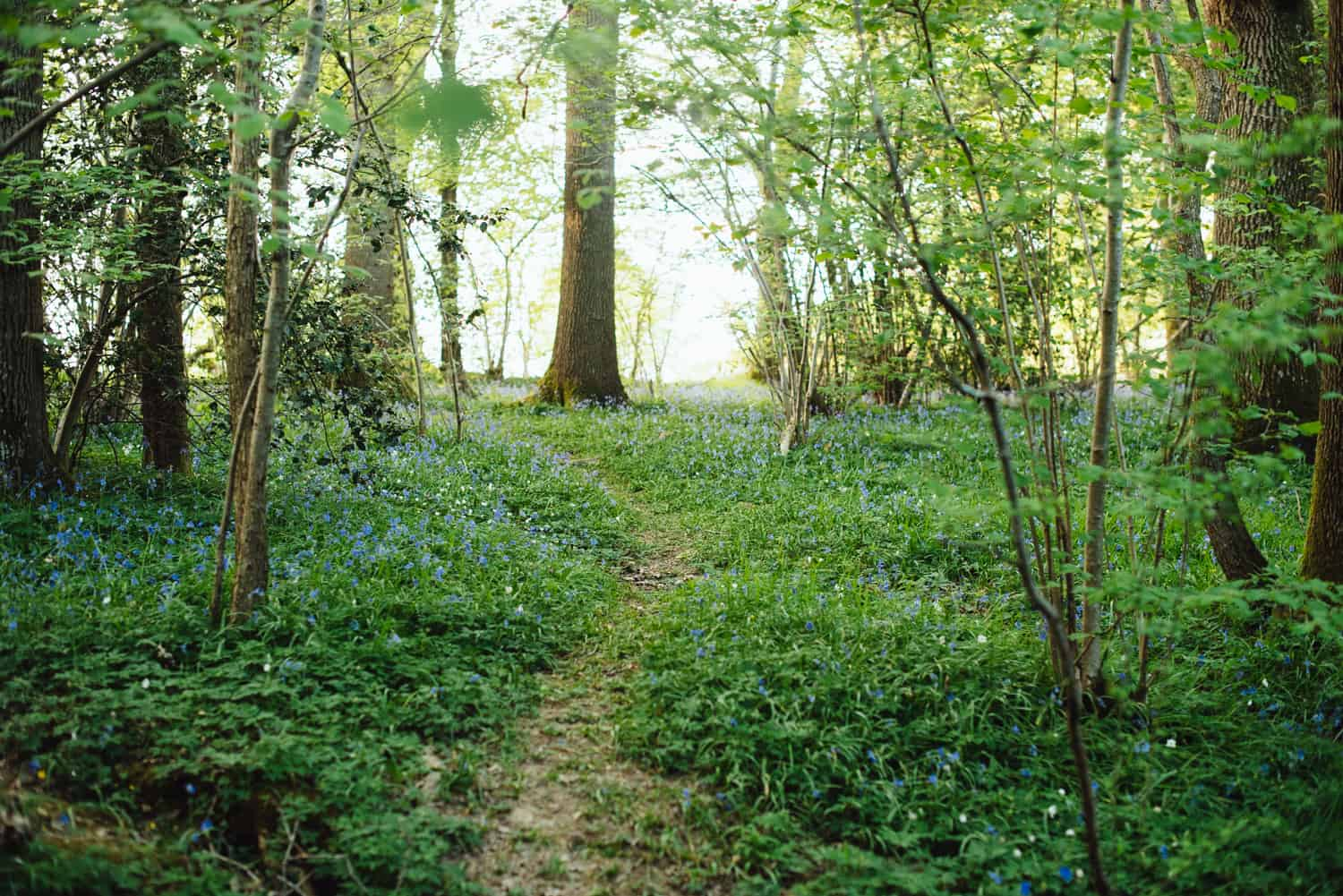 Billingshurst Bluebell Walk